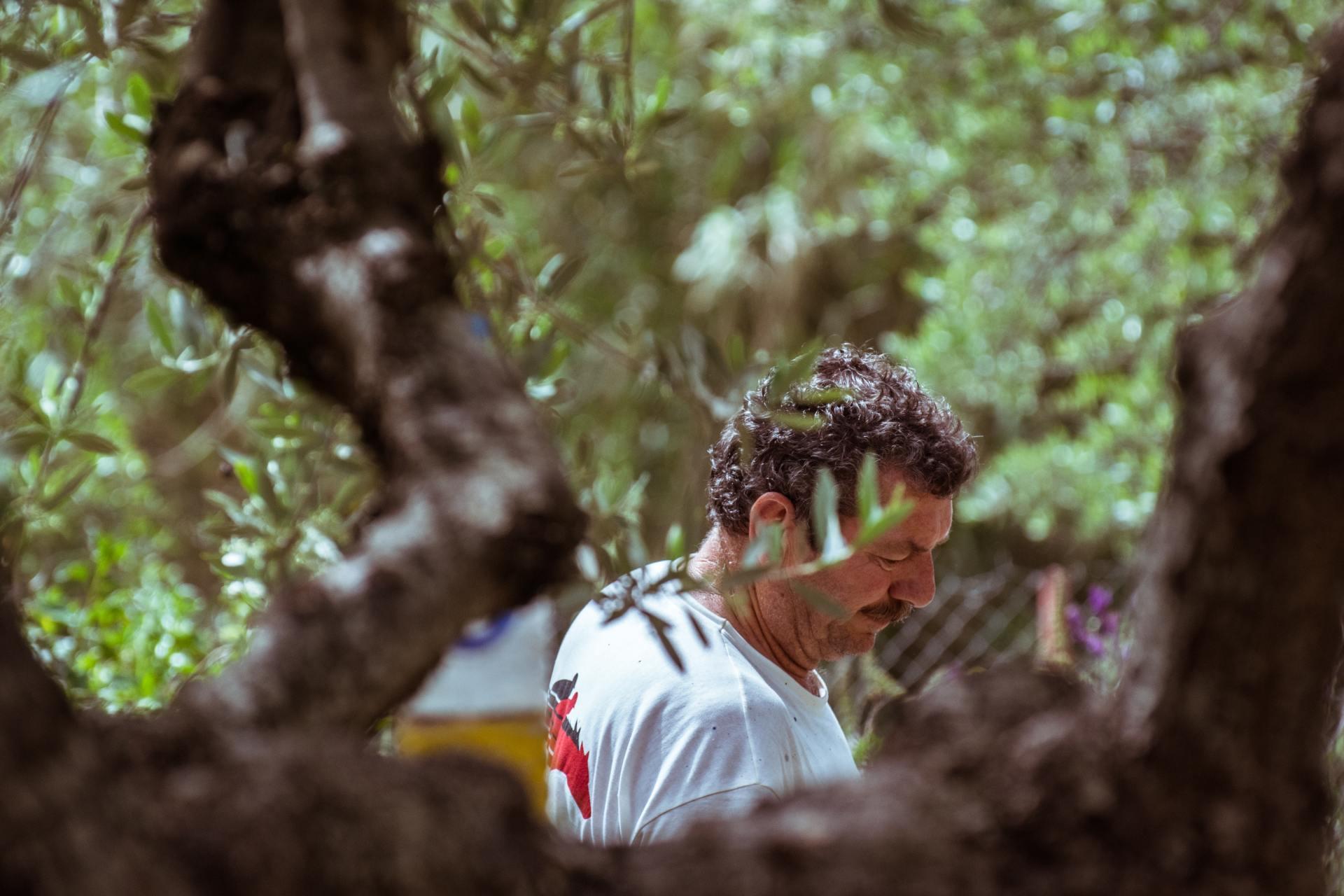 Olijvenoogst Griekenland - man achter olijfboom - &Olives Travel