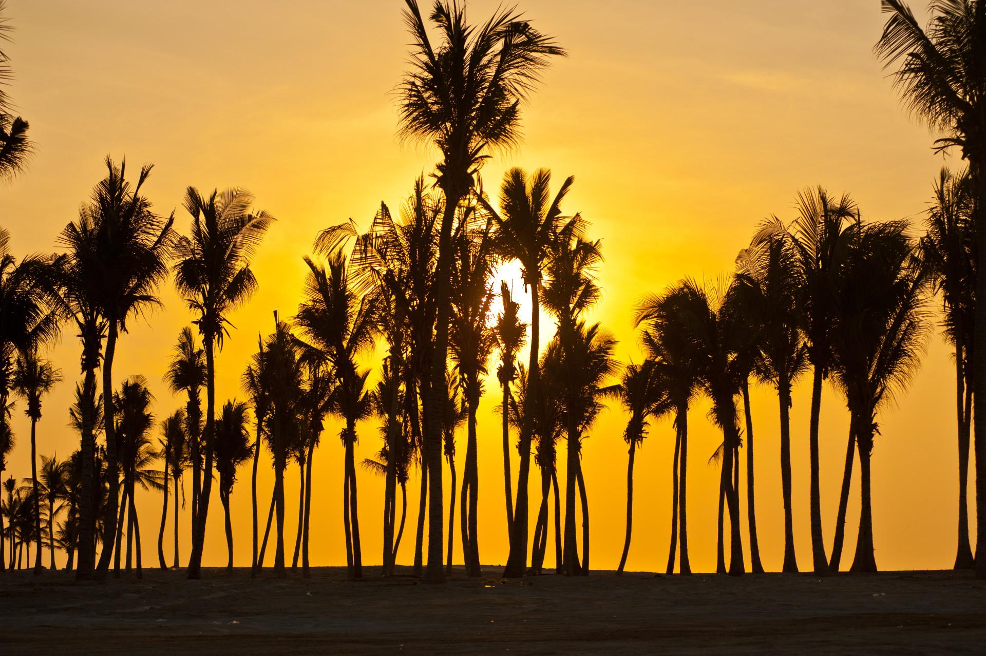 Zonsondergang palmbomen Salalah, Dhofar, Oman