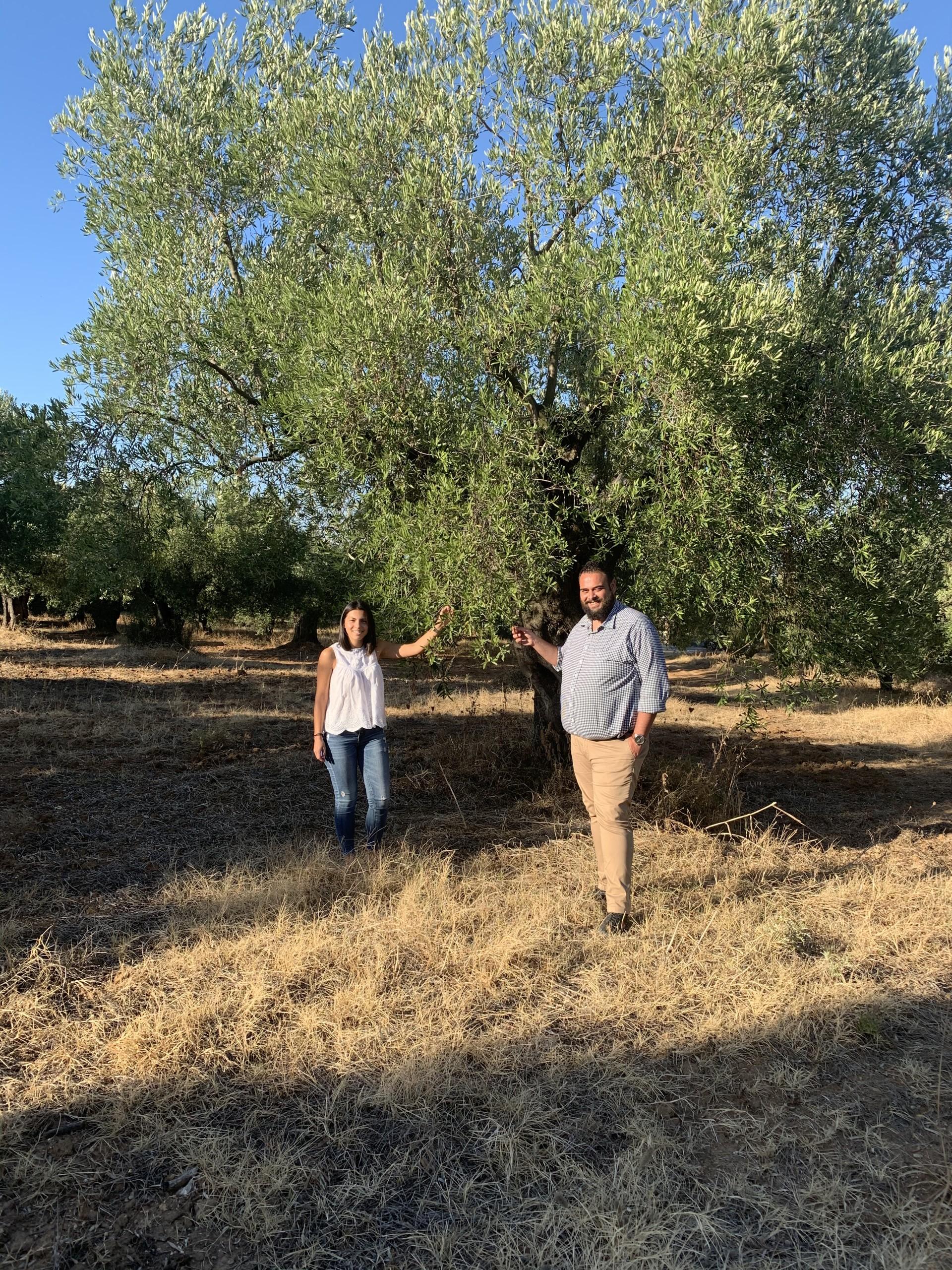 Lokale partner Griekenland onder olijfboom &Olives Travel
