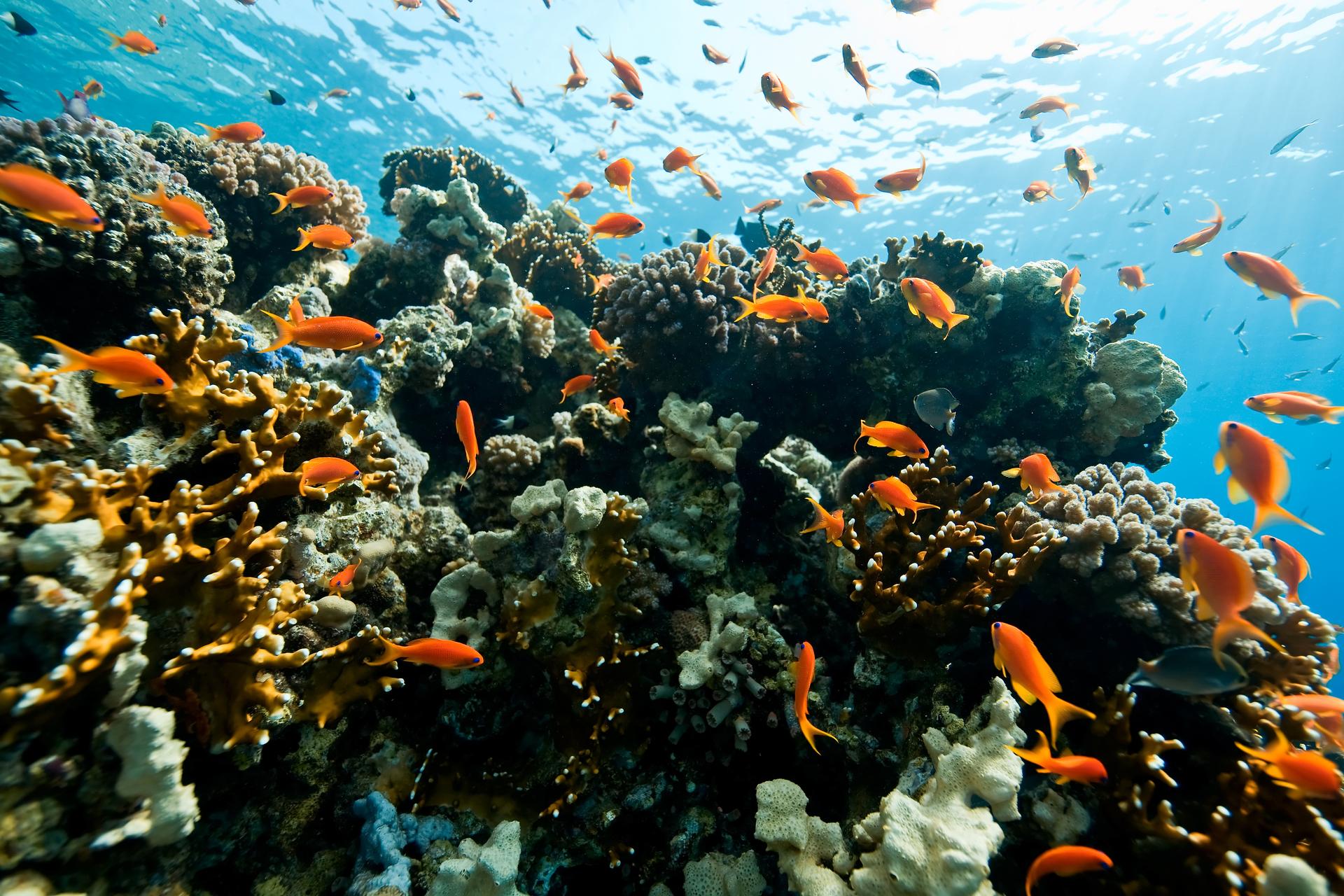 Prachtige gekleurde vissen in helderblauw water