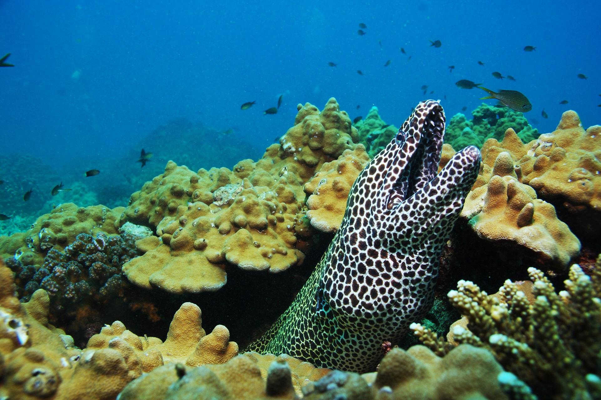 Bijzondere dieren en prachtige koralen