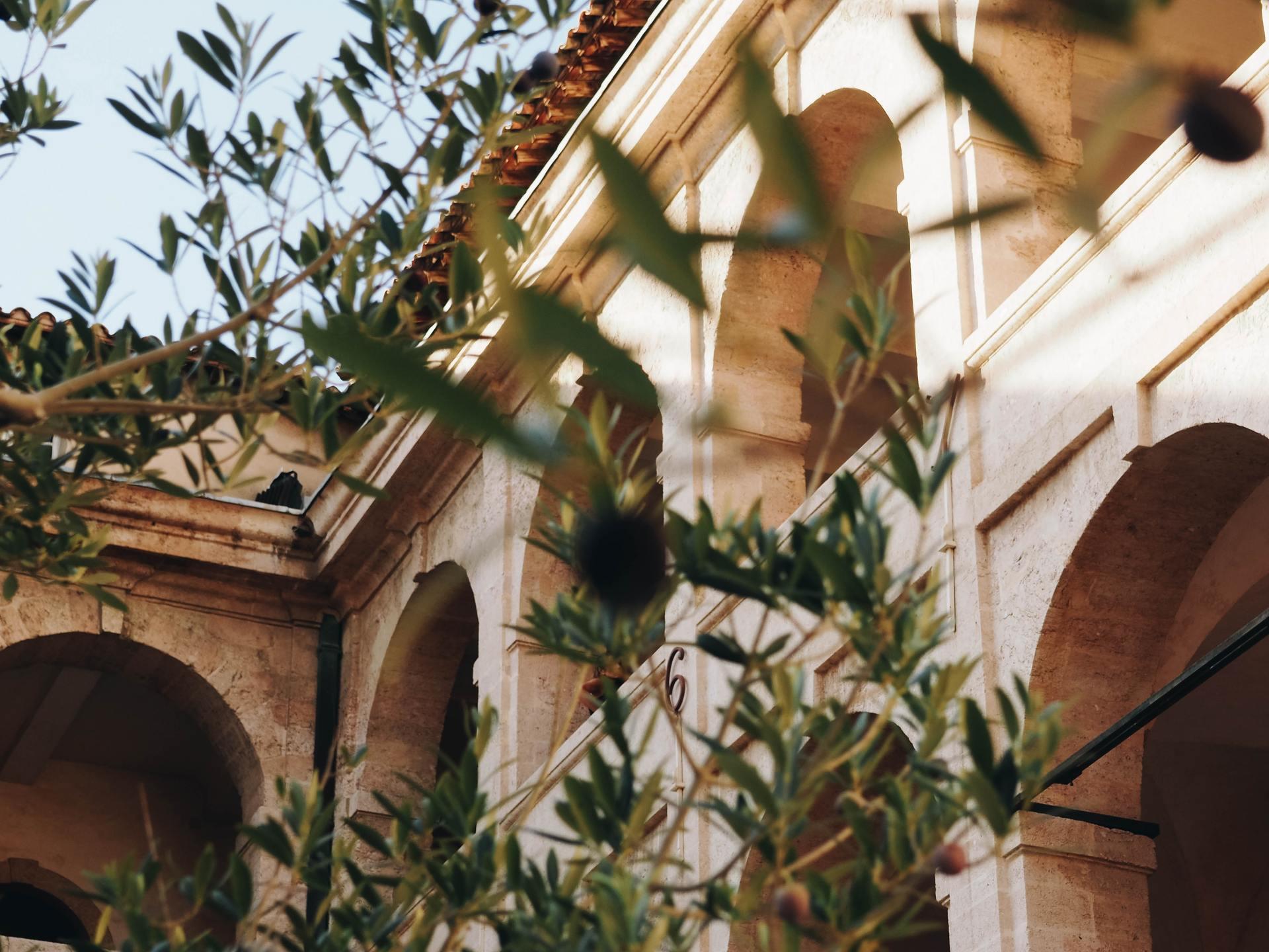 Olijftakken voor gebouw, Malta