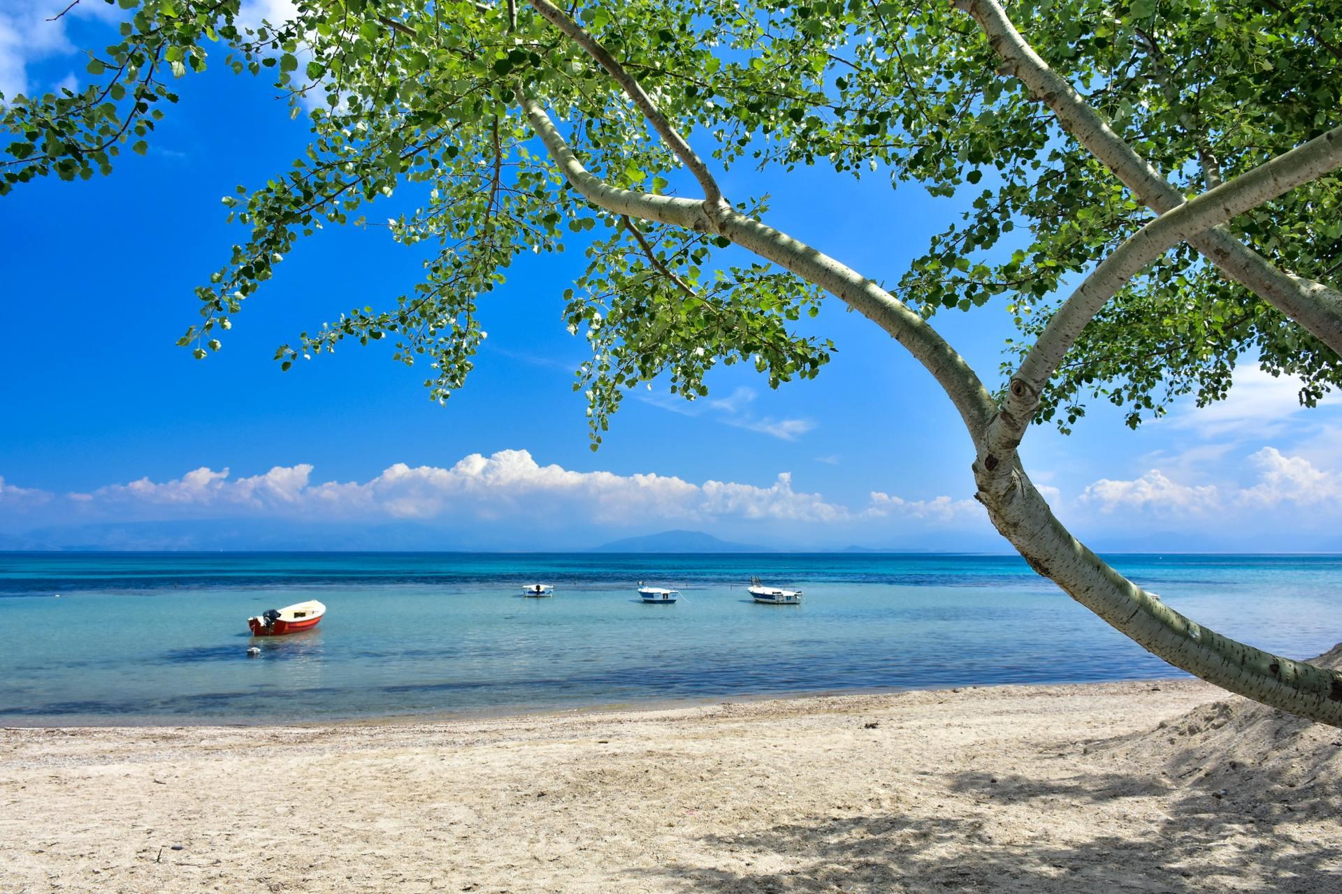 Blauwe zee met een mooie boom op Kreta