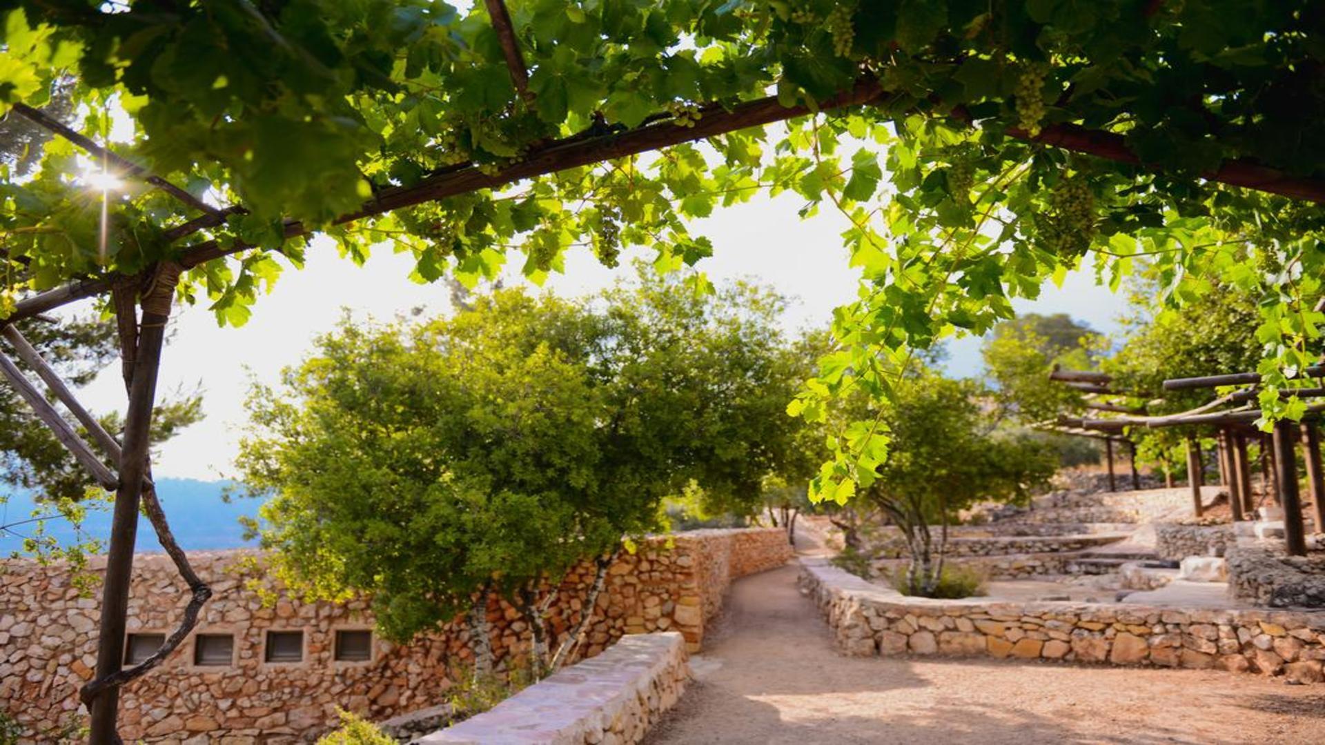 Mooie begroeiing bij Kibboets Yad Hasmona, regio Jeruzalem, Israël