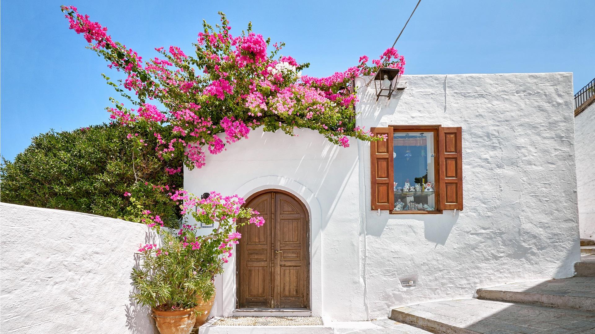 Mooie bloemen in Lindos, Rhodos