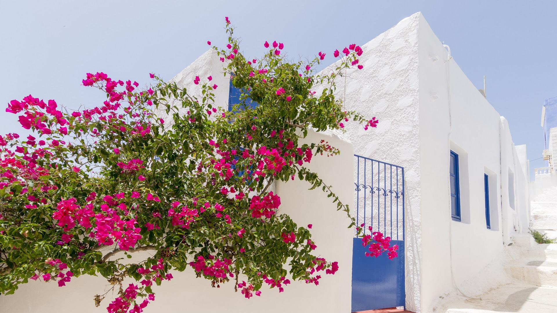 Witte muren, blauwe deuren en ramen en prachtige, gekleurde bloemen