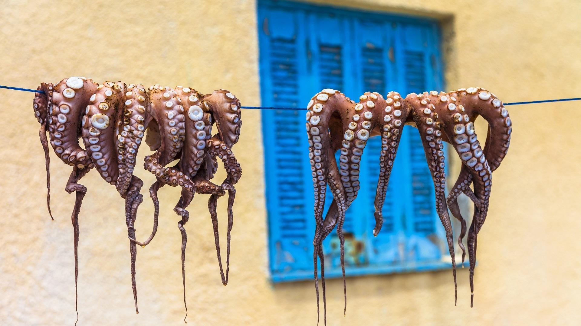 Het drogen van de octopus voor een traditioneel gerecht