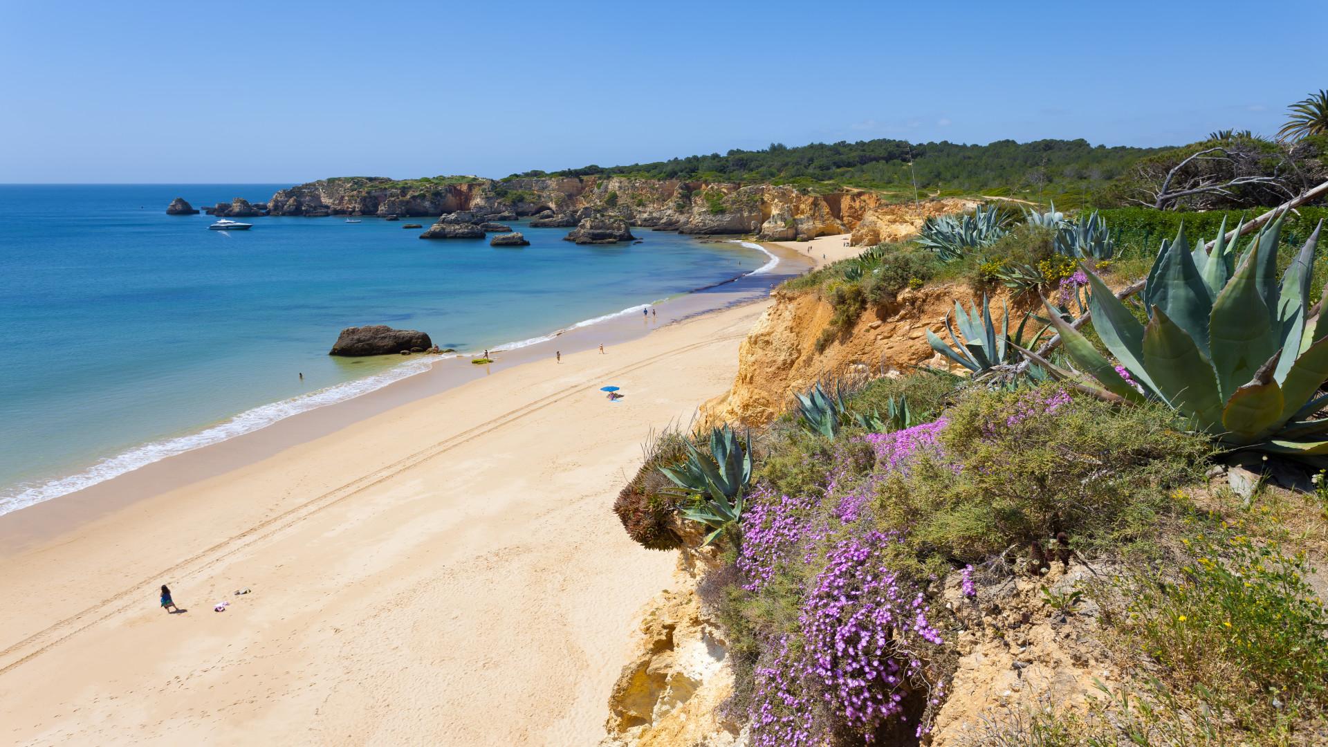 Strand Praia Vau, Algarve, Portugal, strand, zee, groene heuvels, paarse bloemen