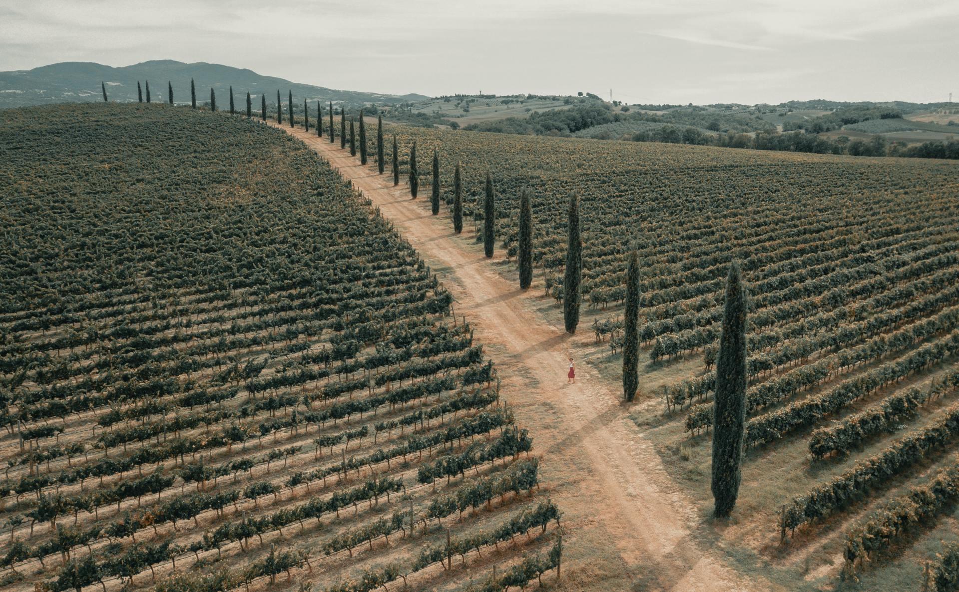Toscane Italie laan met cipressen langs wijngaarden