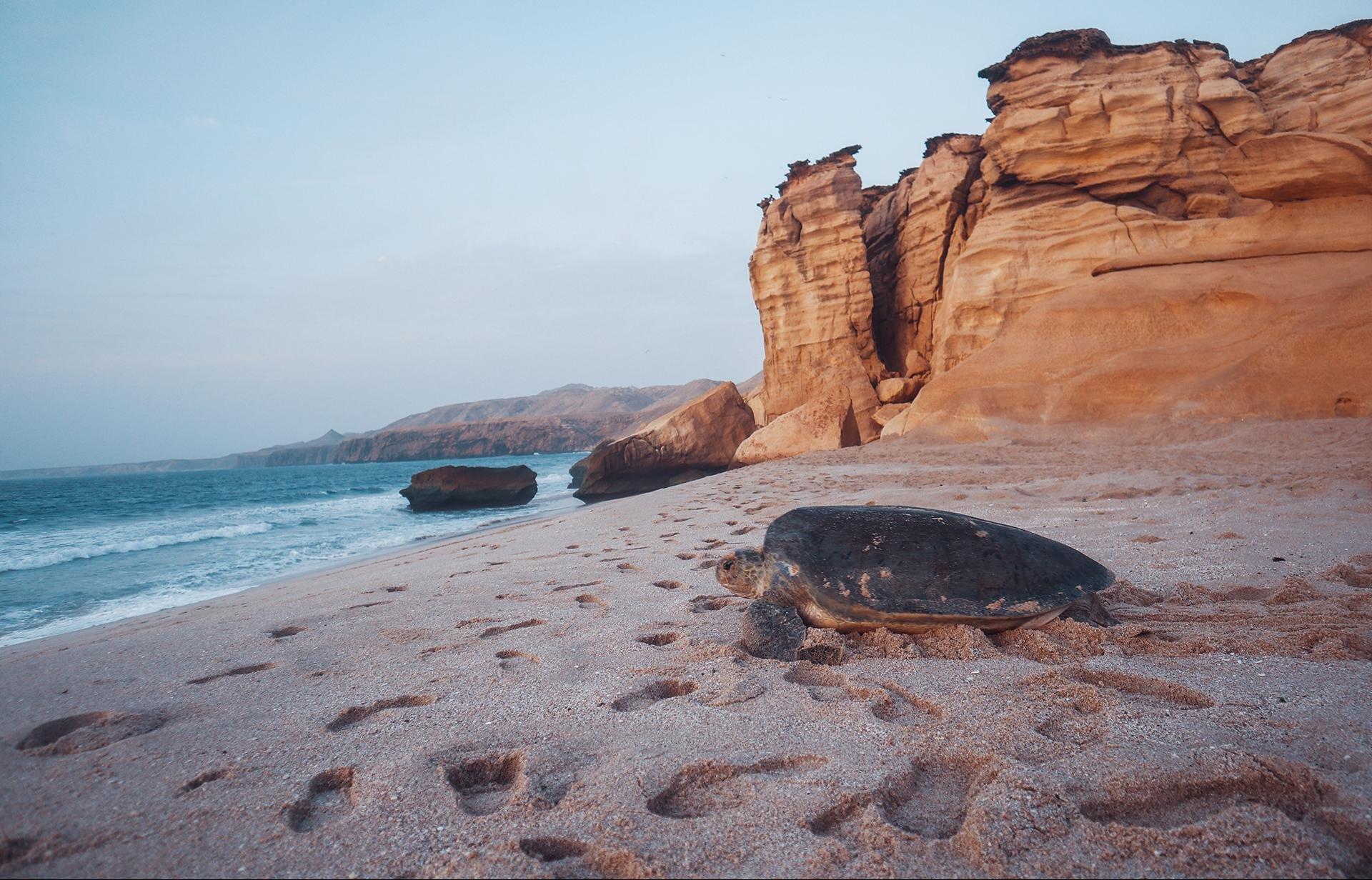 Ras Al Jinz Turtle Reserve schildpad - Ras Al Jinz