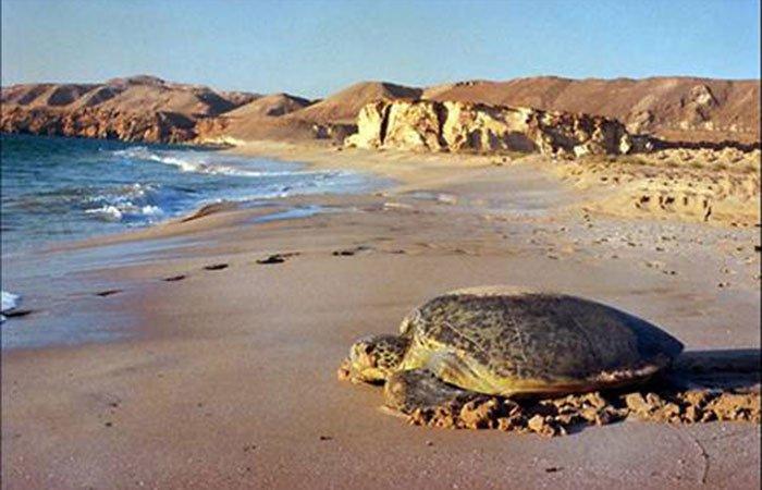 Ras Al Hadd Holiday Resort - Ras Al Hadd