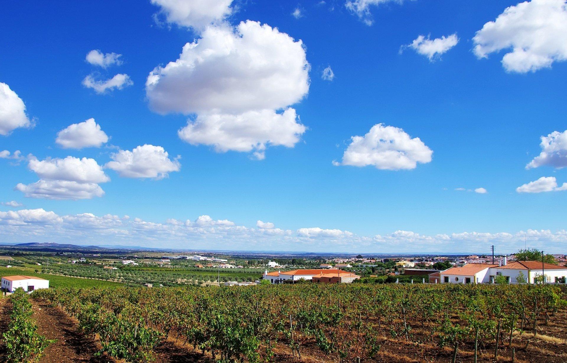 Portugal - Alentejo - Monzaras