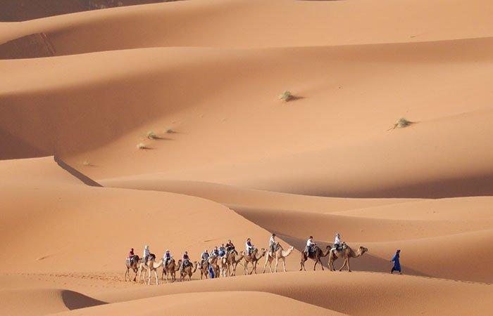 Kamelen in zandduinen nabij Merzouga - Marokko
