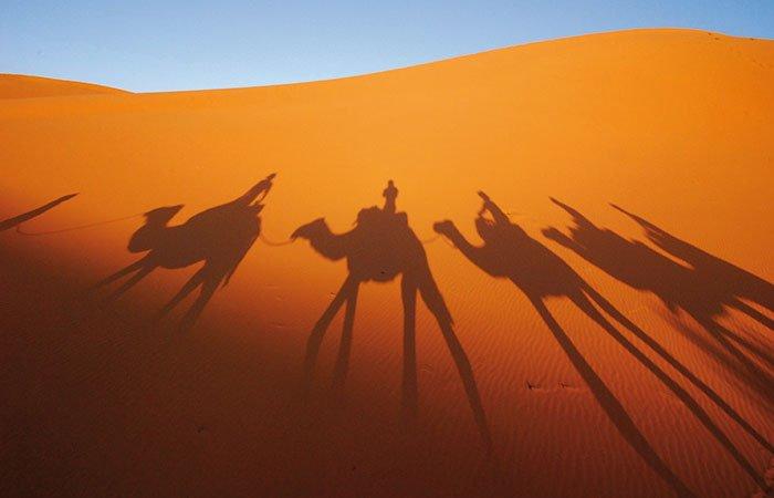 Schaduw kamelen in zandduinen - Marokko