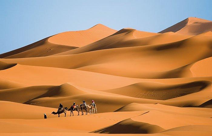 Kamelen in zandduinen - Marokko
