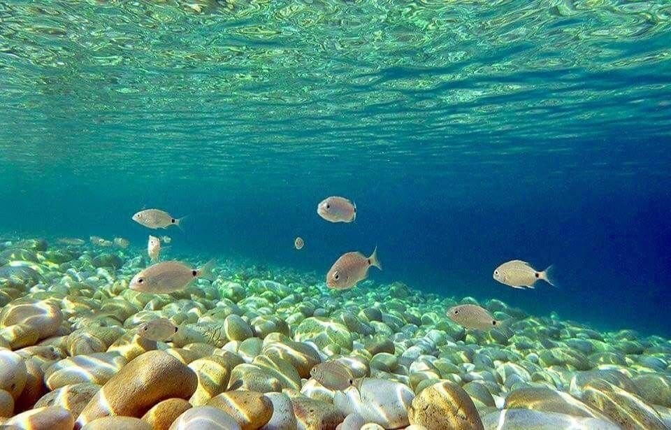 Paxos - onderwaterwereld
