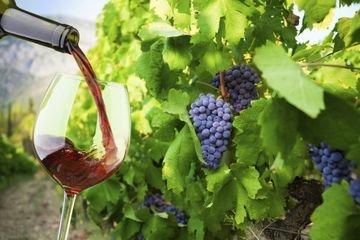 Santorini - winetasting