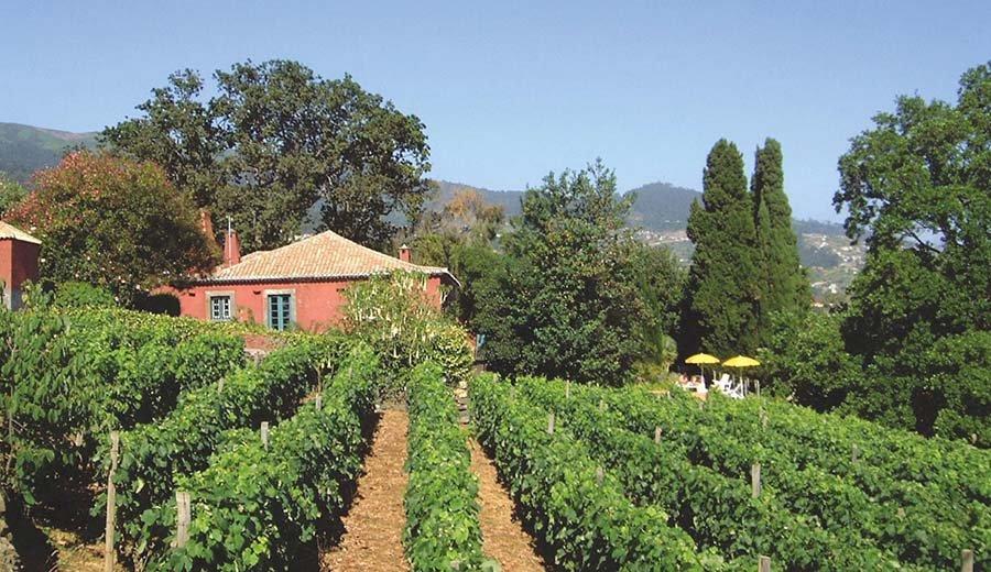 Quinta das Vinhas - wijngaard