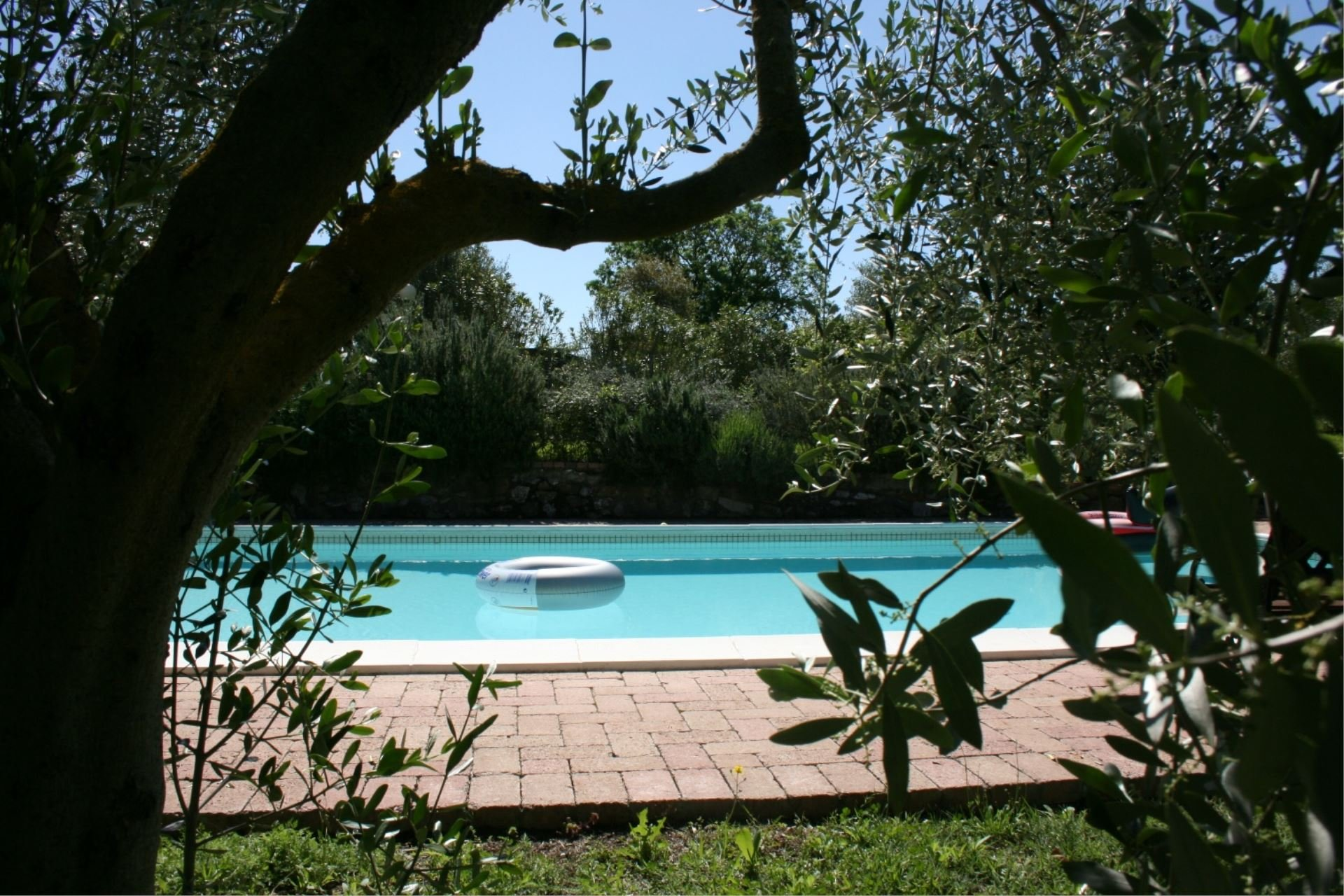 santa maria zwembad tussen de olijfbomen