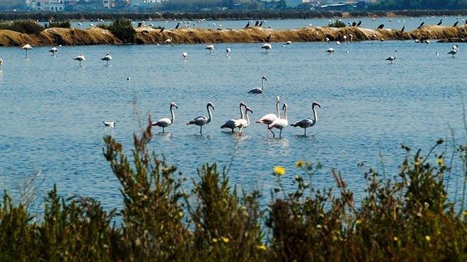 Natuurpark Ria Formosa
