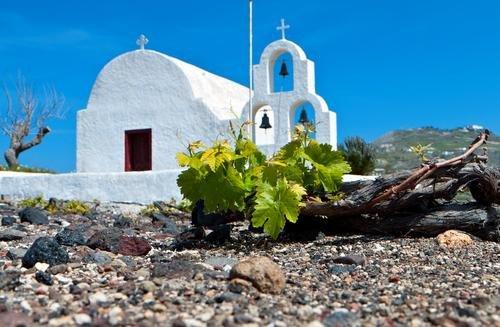 Santorini wijngaard