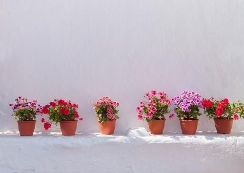 Eleftheria - bloemen