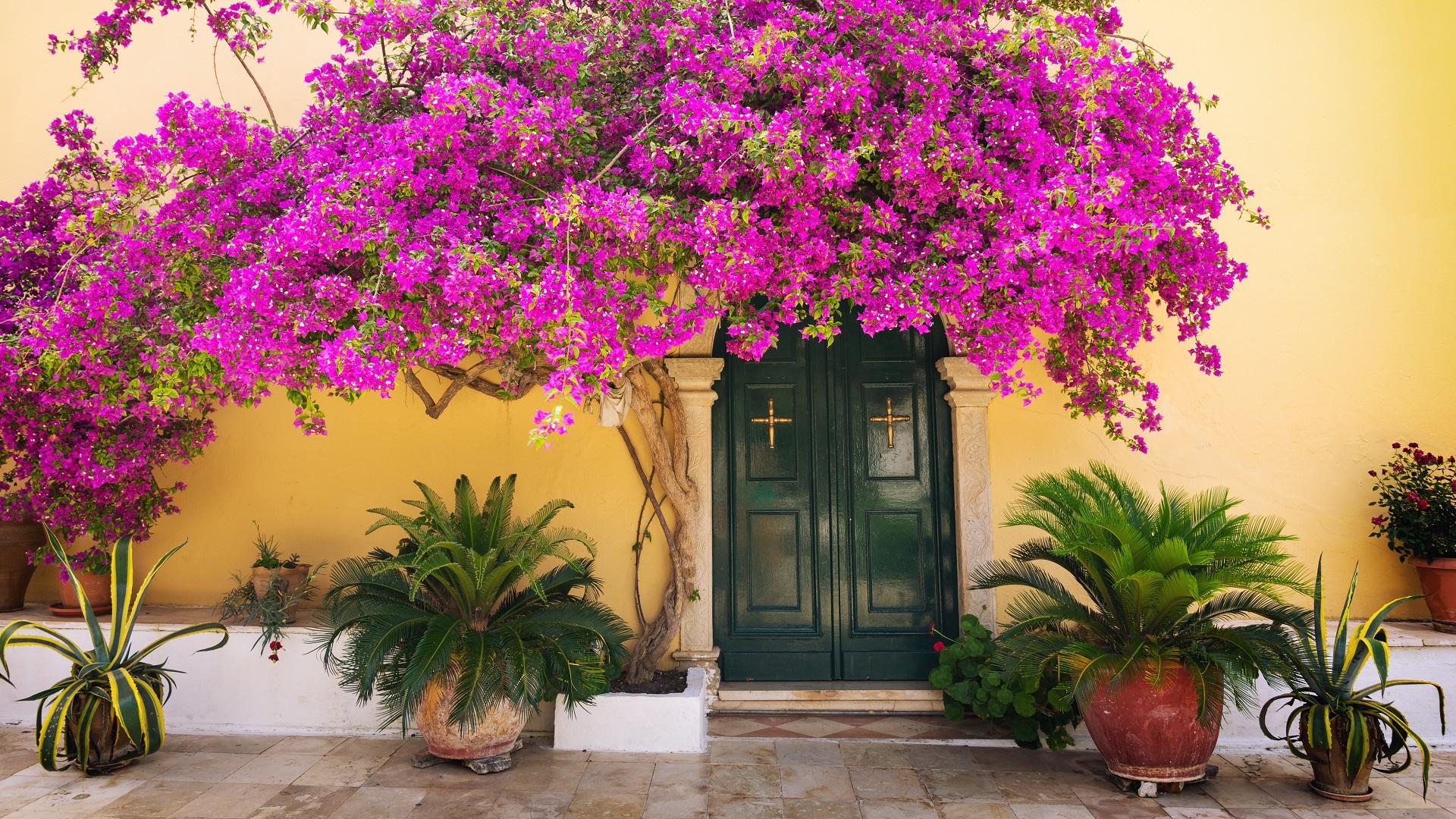 Een mooie deur met paarse bloemen in Corfu