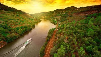 Wijngaarden aan de rivier de Douro in Portugal