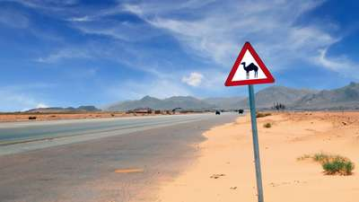 Verkeersbord 'Pas op overstekende kamelen', Jordanië