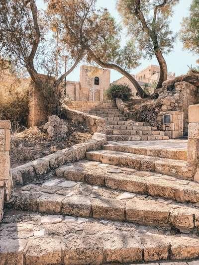 Israel Tel Aviv olijfbomen