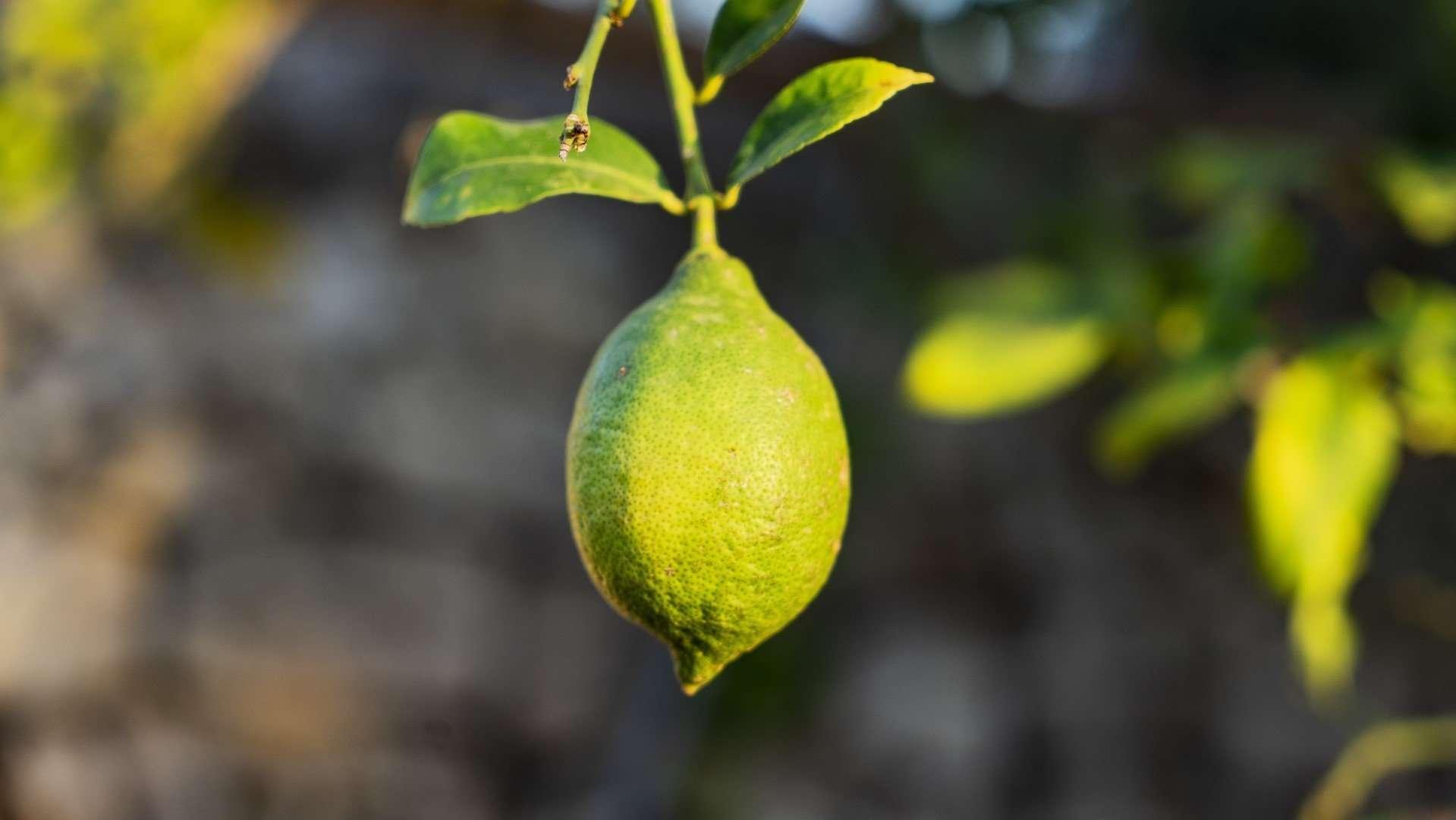 citroen in scicli sicilie