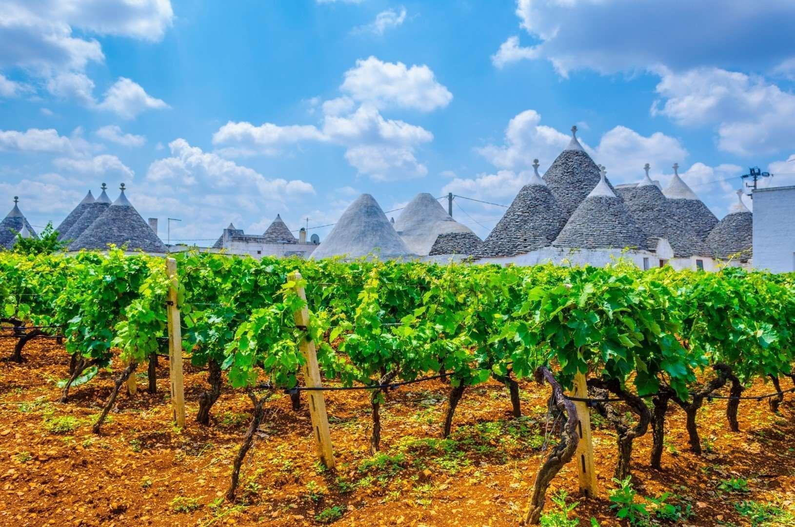 wijngaarden in alberobello