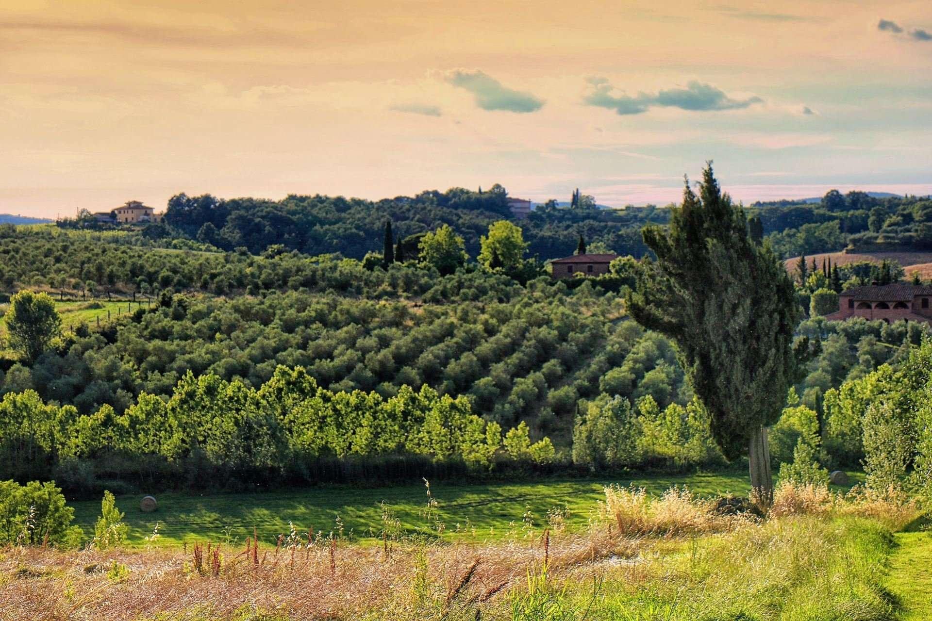 selva degli ulivi - uitzicht op olijfbomen en wijngaarden
